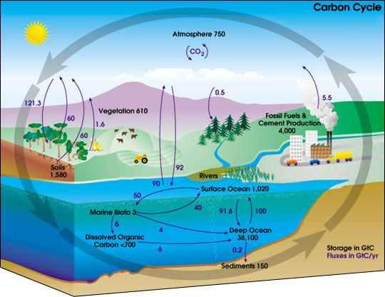 carbon_cycle_diagram
