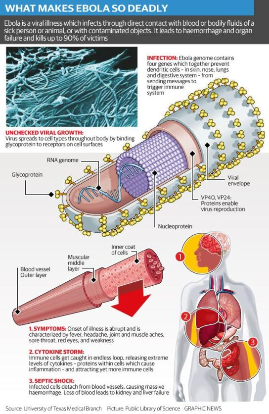 517546-ebola_explained_web