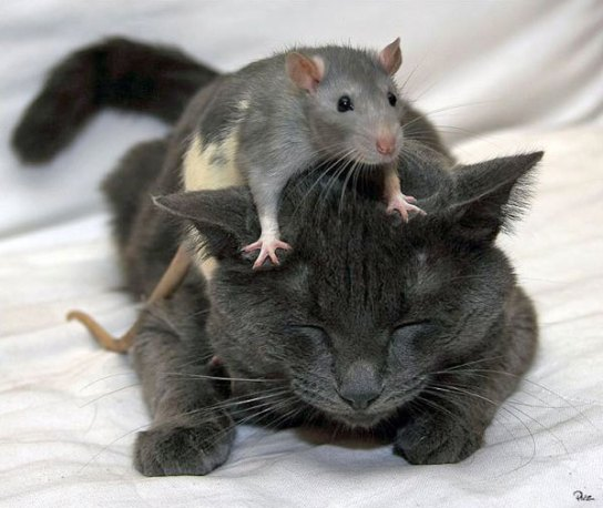 cat_and_mouse