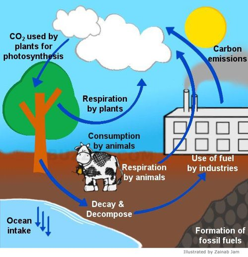 carbon-cycle-1