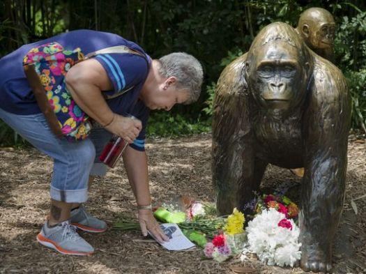 636001363053931578-APTOPIX-Zoo-Gorilla-Child-Hurt