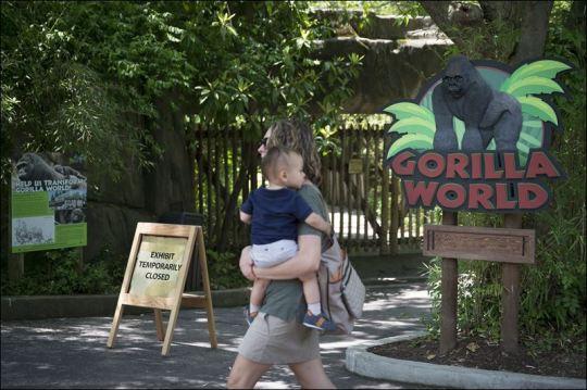 Zoo-Gorilla-Child
